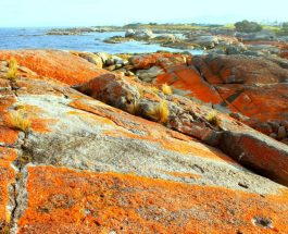 Sights & Sounds: Bay of Fires, Launceston